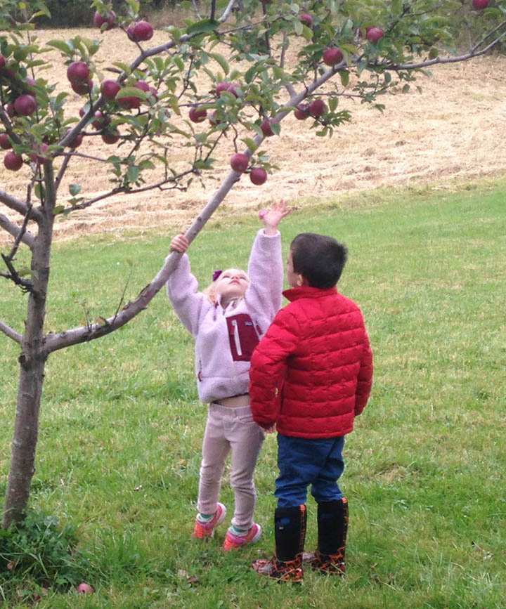 apple-picking-4.jpg