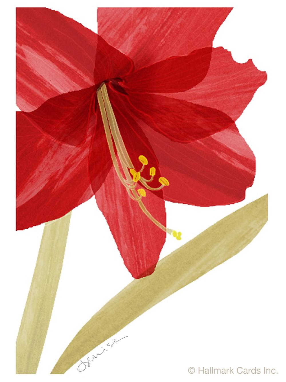 Red Amaryllis Smas Card.jpg