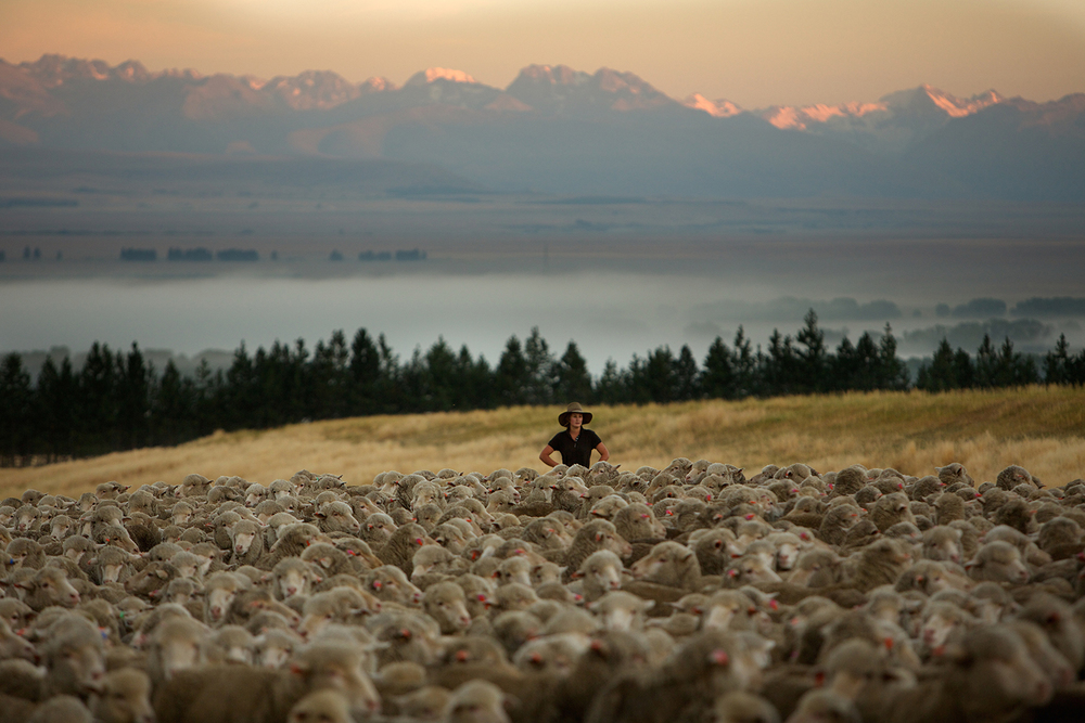 NZ_Sheep_Culture_ 024.jpg