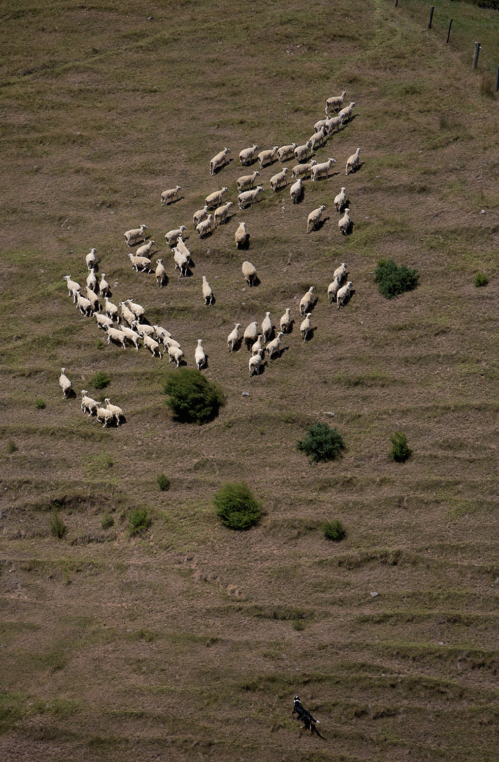 NZ_Sheep_Culture_ 027.jpg