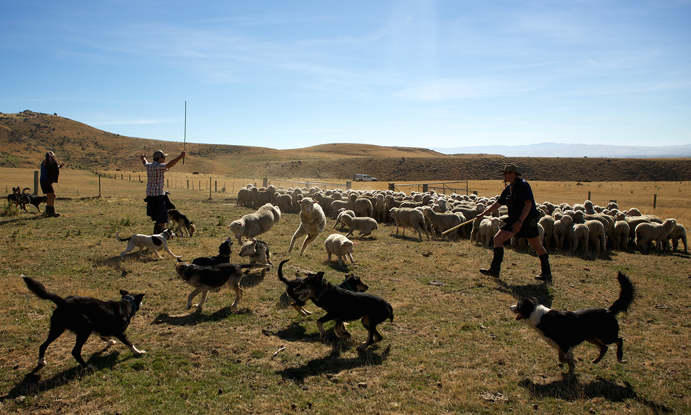 NZ_Sheep_Culture_ 036.jpg