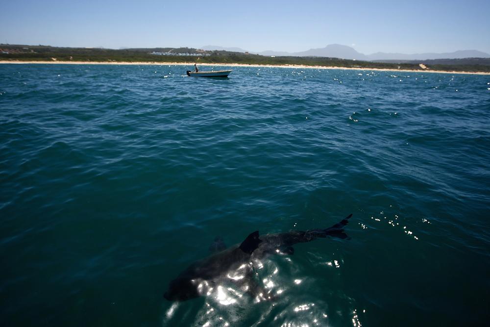 Shark_Wranglers_ 002.jpg