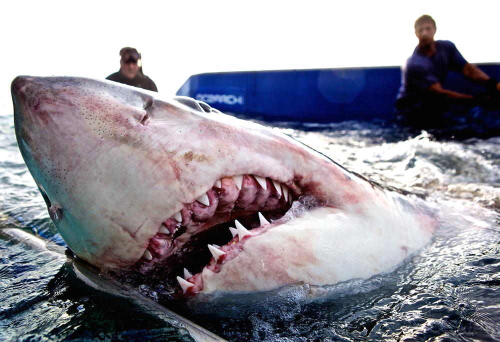 Shark_Wranglers_ 001.jpg