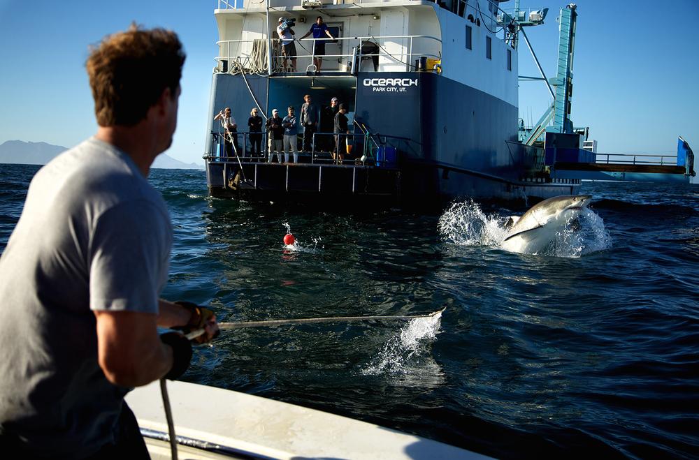 Shark_Wranglers_ 004.jpg