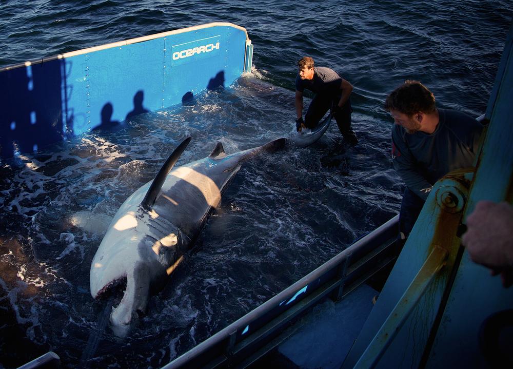 Shark_Wranglers_ 005.jpg