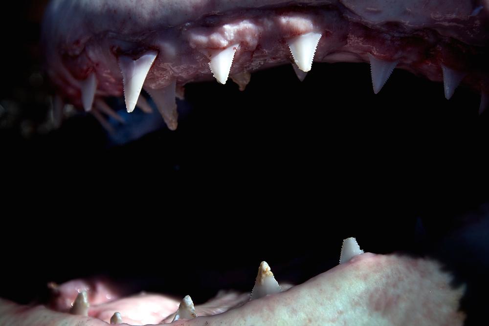 Shark_Wranglers_ 006.jpg