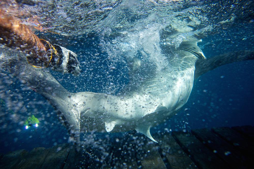 Shark_Wranglers_ 010.jpg
