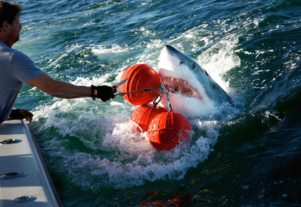 Shark_Wranglers_ 012.jpg