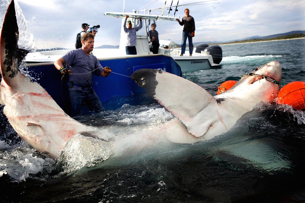 Shark_Wranglers_ 013.jpg