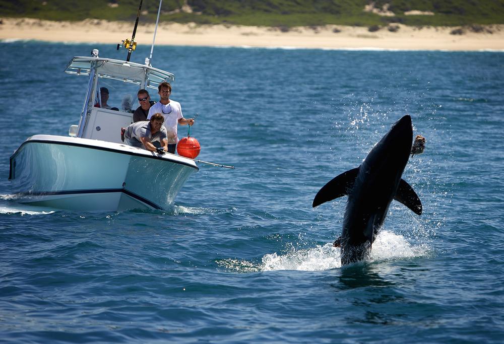 Shark_Wranglers_ 017.jpg