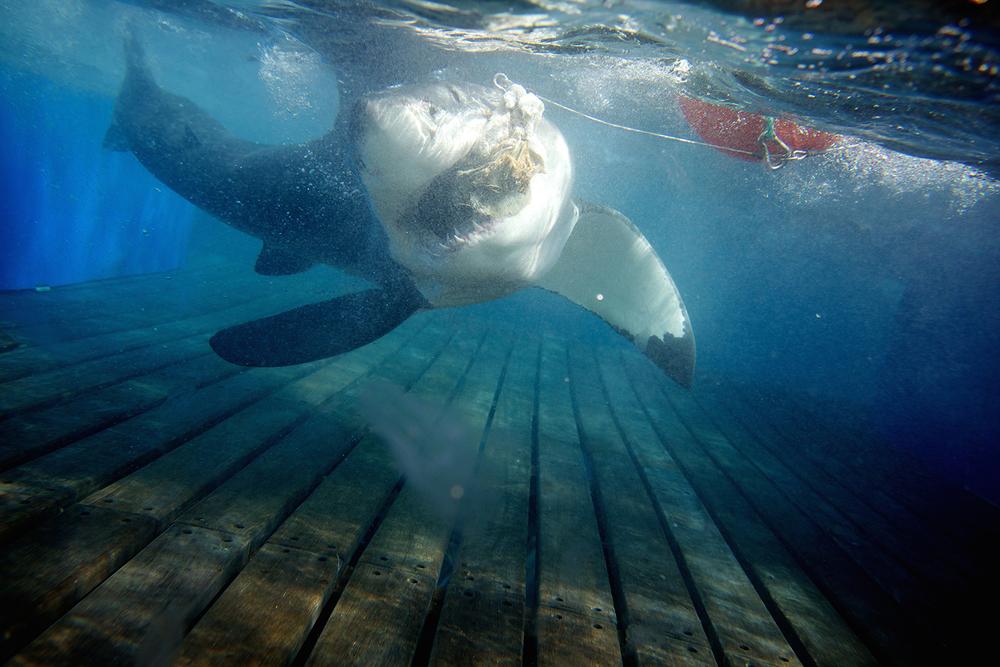Shark_Wranglers_ 019.jpg