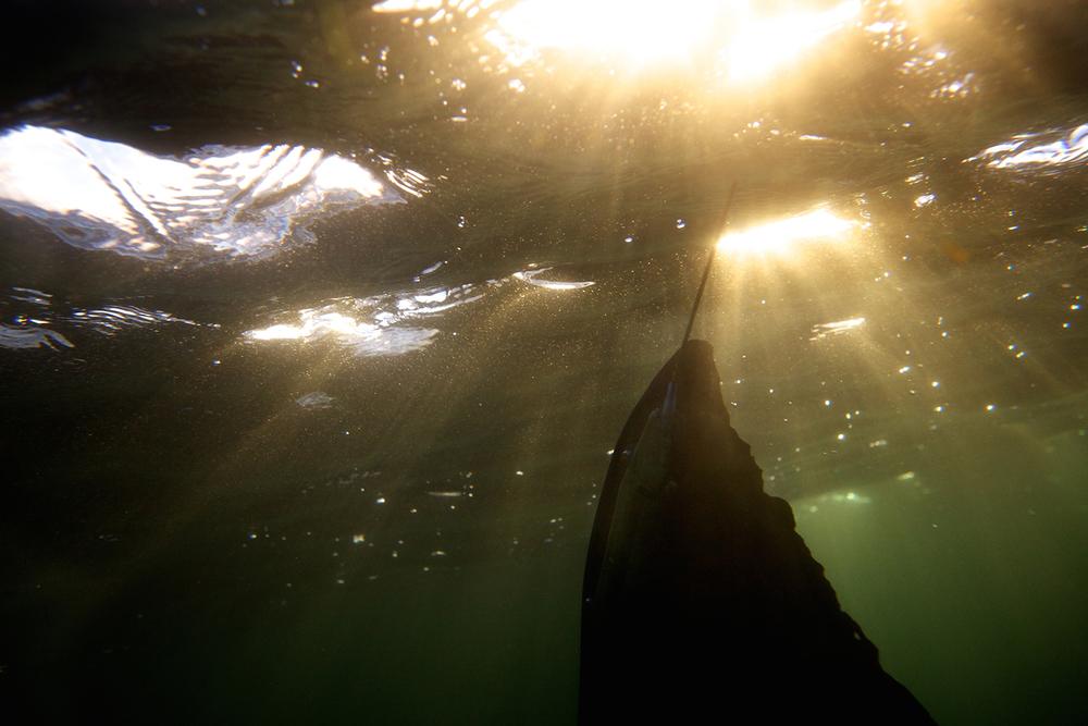 Shark_Wranglers_ 023.jpg