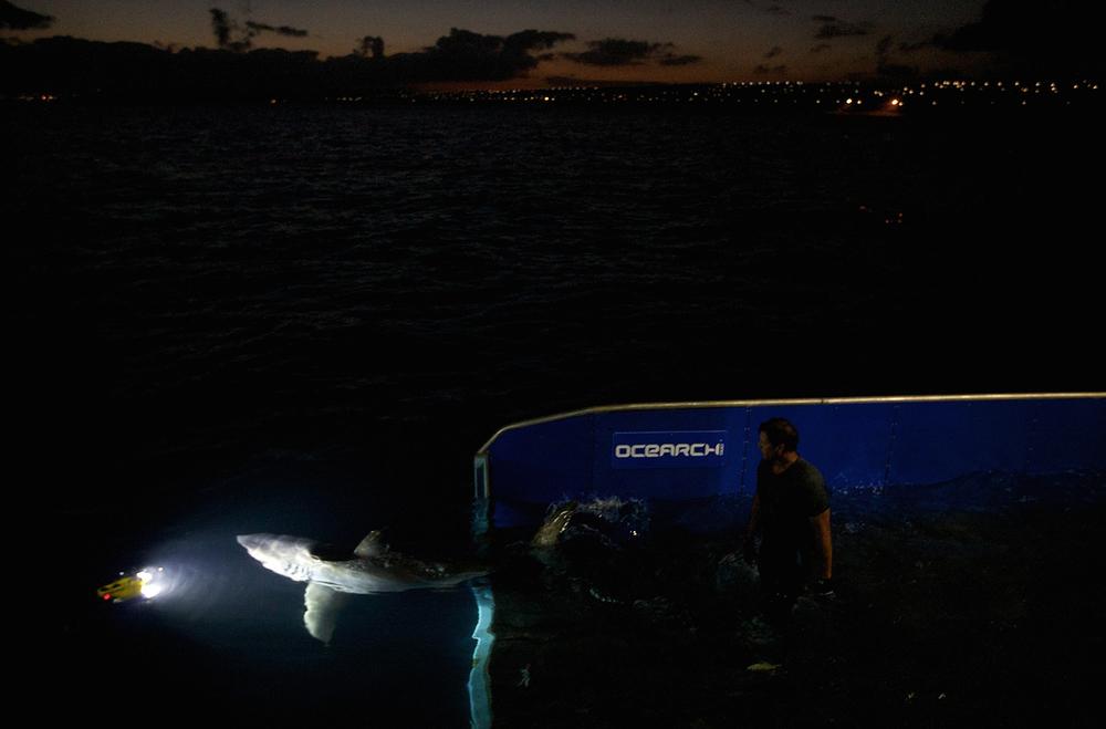 Shark_Wranglers_ 025.jpg
