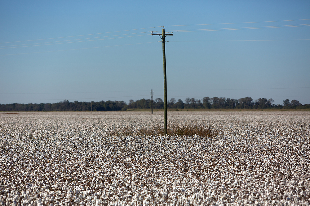 Cotton_USA_006.jpg