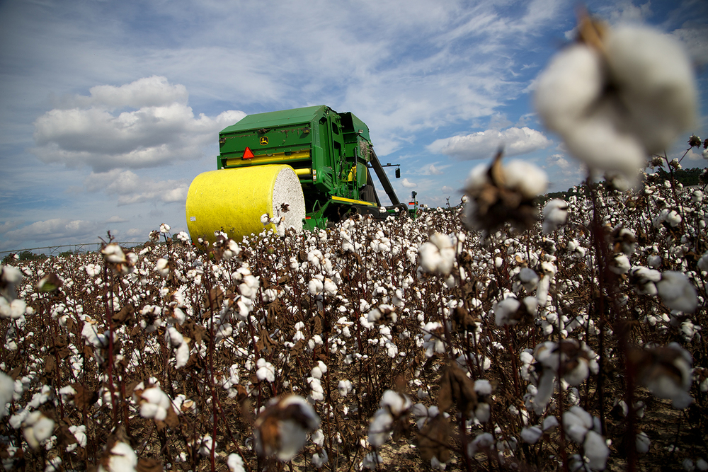 Cotton_USA_010.jpg