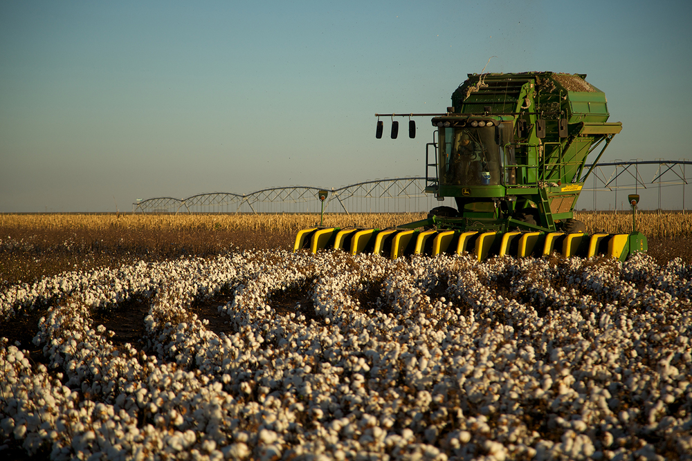 Cotton_USA_013.jpg