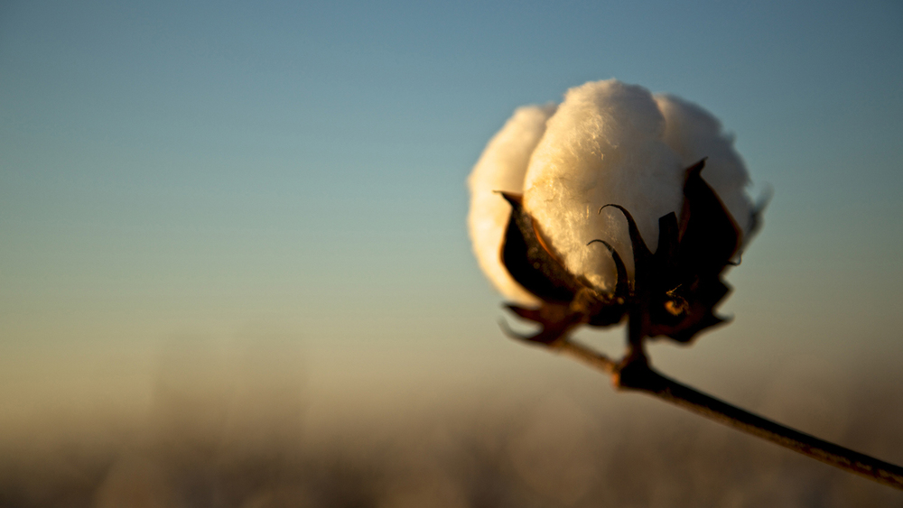 Cotton USA