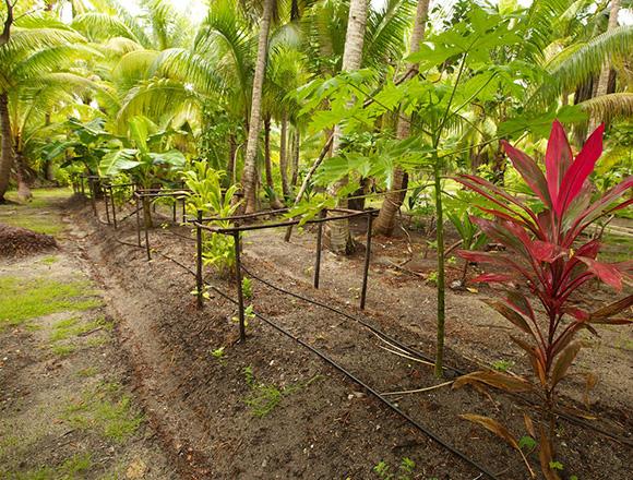organic-garden.jpg