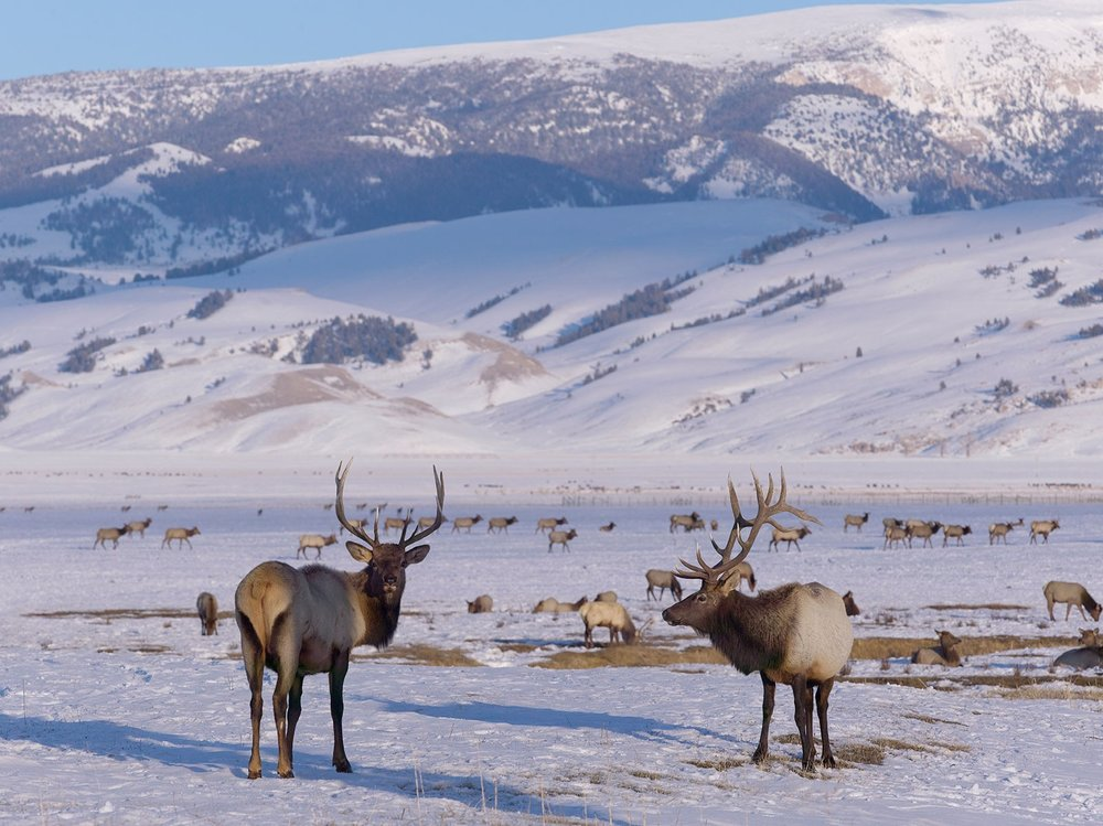 Amangani Elk Refuge.jpg