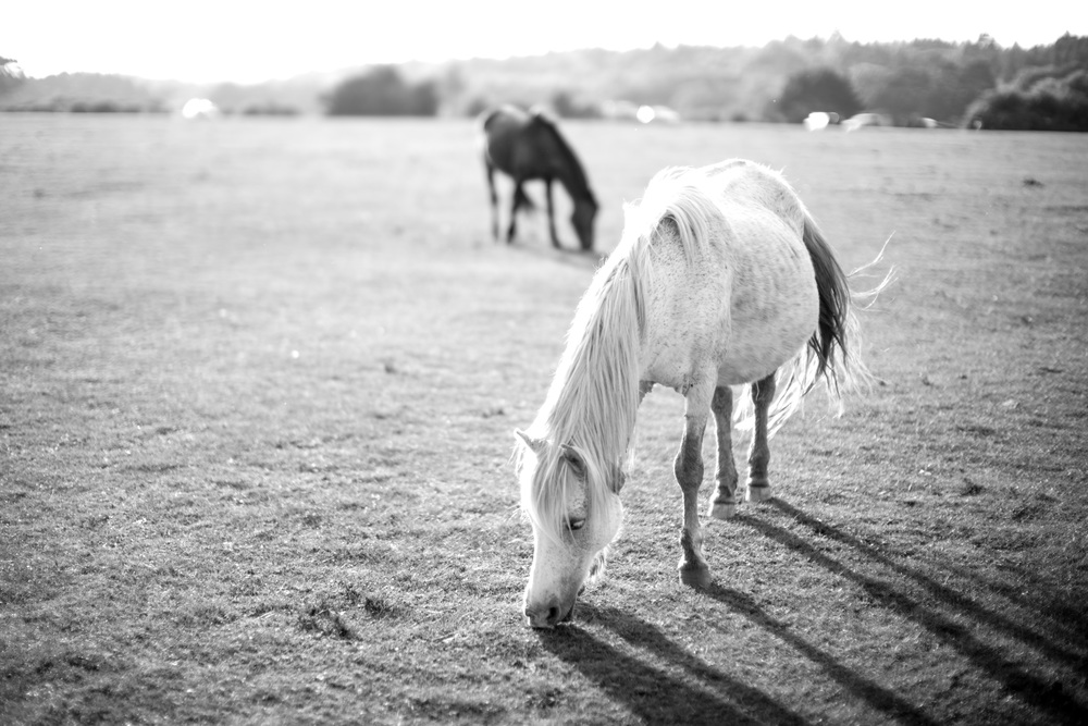 The New Forest is full of wild ponies. (Leica Noctilux-M 50mm f/0.95 ASPH.)