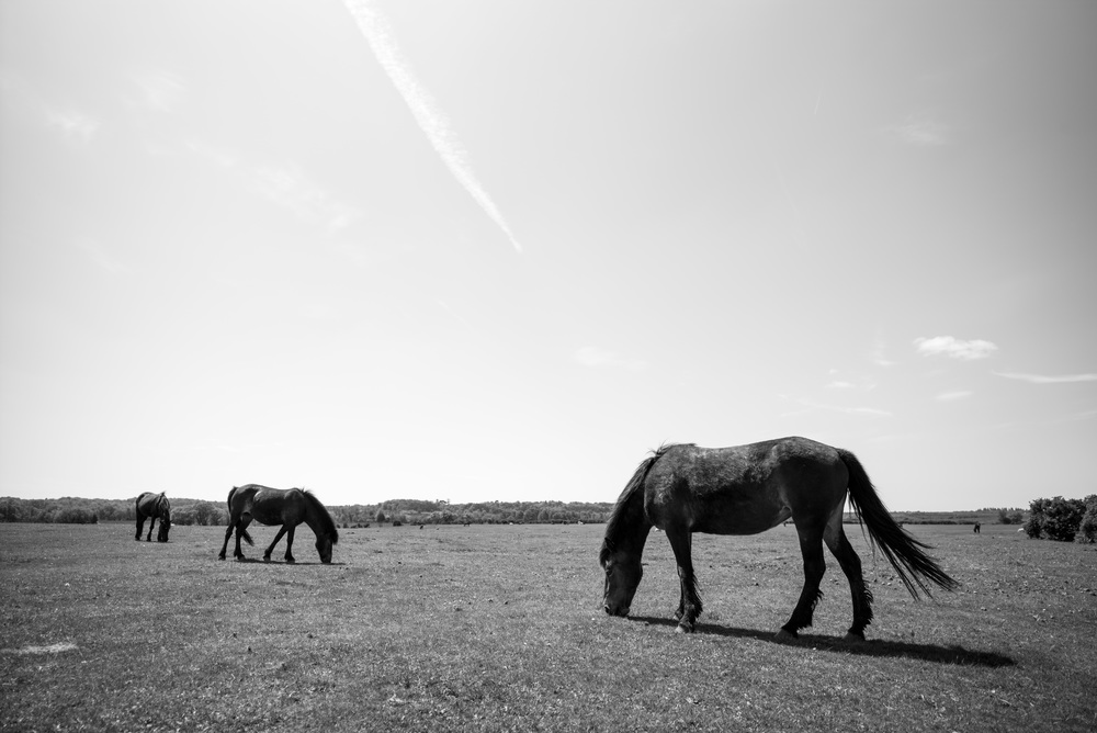 Ponies like to eat. (Leica Super-Elmar-M 21mm f/3.4 ASPH.)