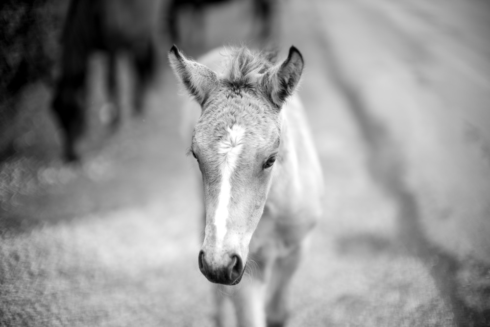 Baby pony. With unconcerned mother in the background.  (Leica   Noctilux-M 50mm f/0.95 ASPH.)