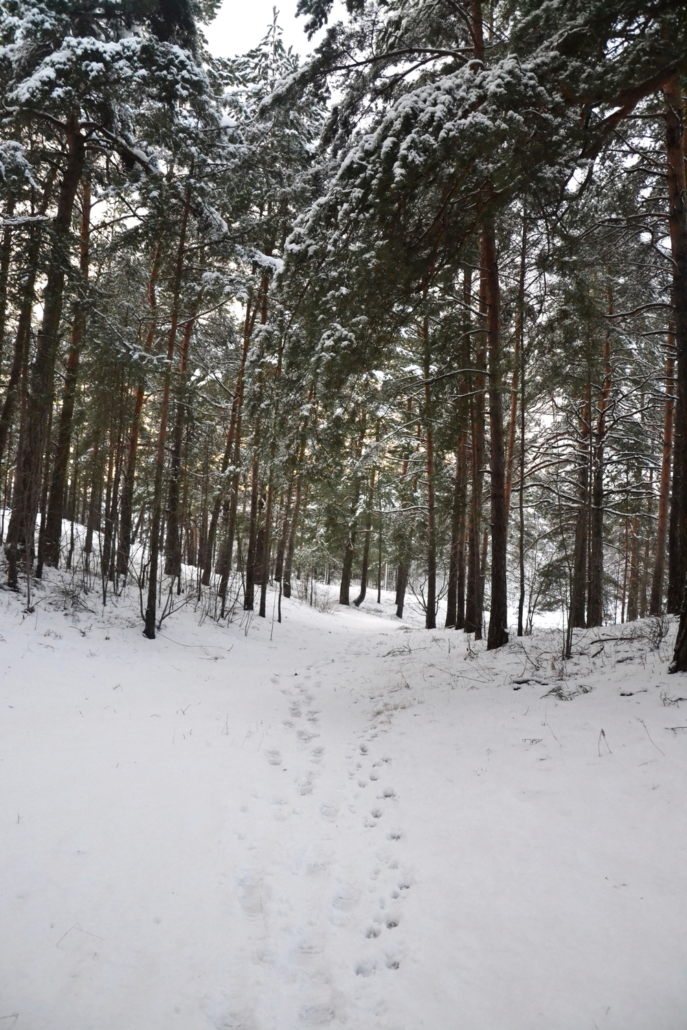 winter path.JPG