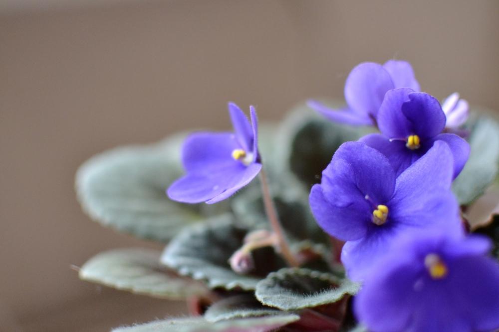 baby flower.JPG