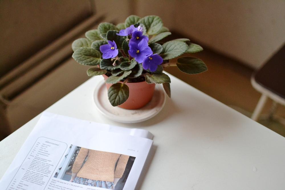 praline and plant.JPG