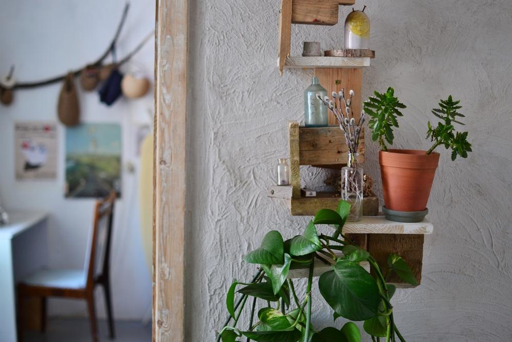 studio plants.JPG