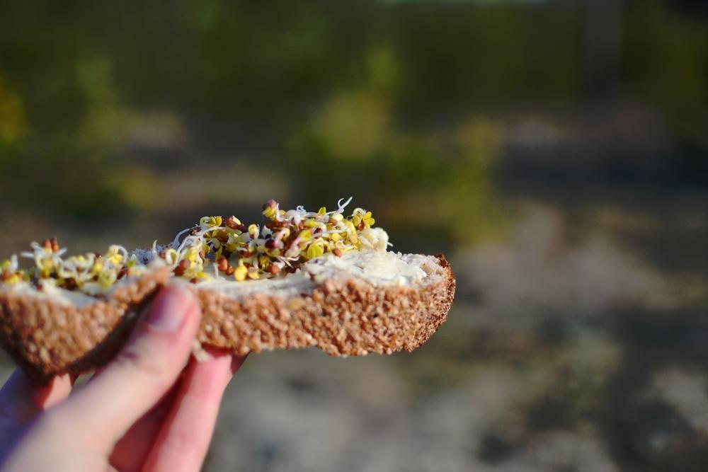 sandwich nature.JPG