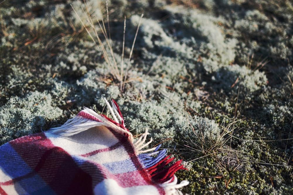 blanket & dry grass.JPG