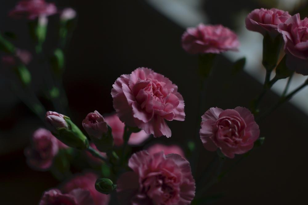 arly morning flowers.JPG