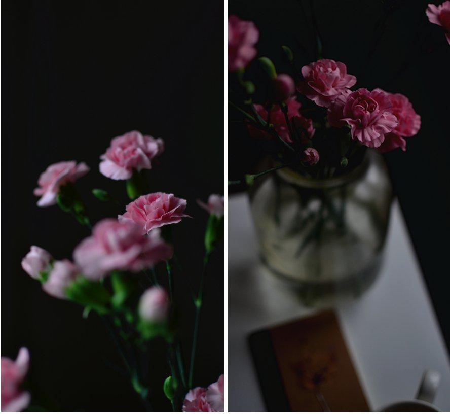 carnation pink morning.jpg