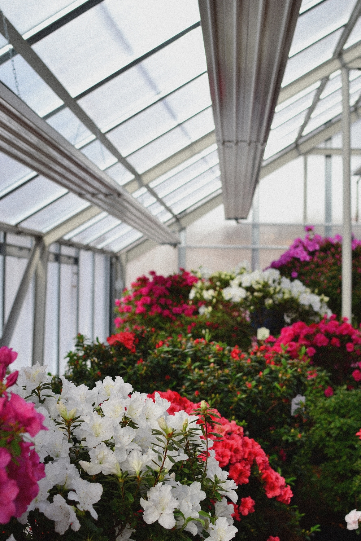 greenhouse vintage.JPG