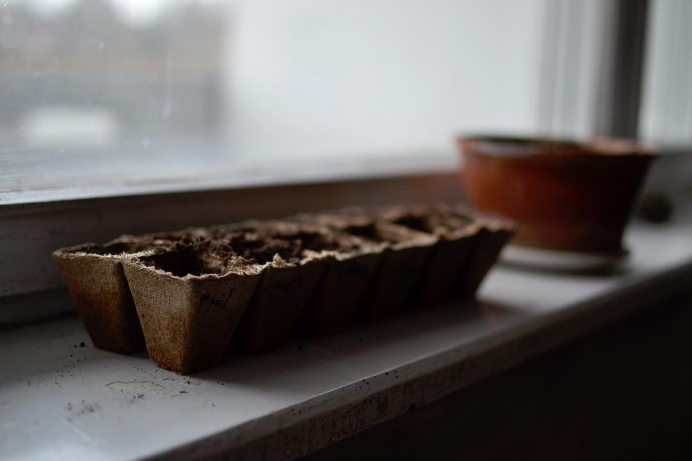 plant holders seeds.JPG