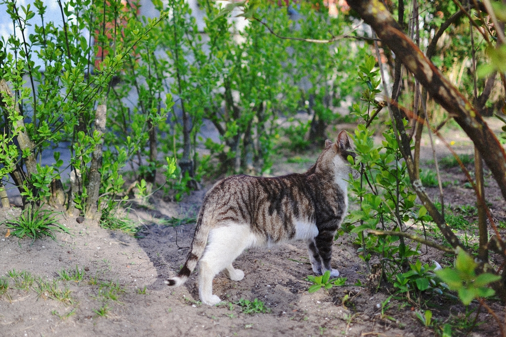 kitty5.JPG
