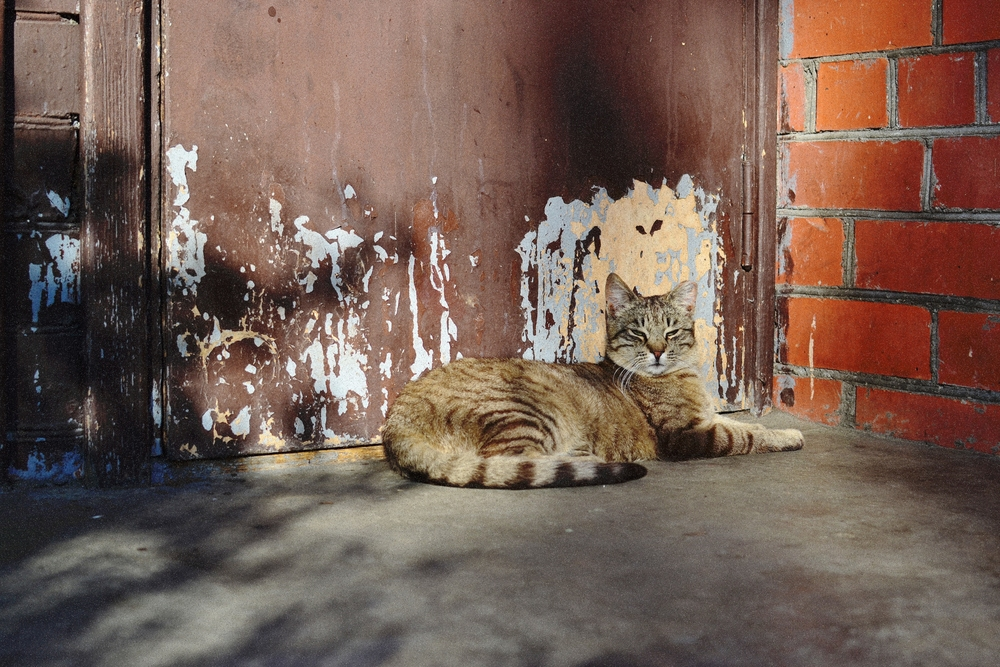 kitty6.JPG