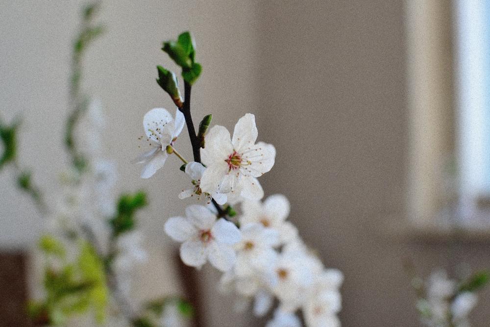 cherry branch.JPG