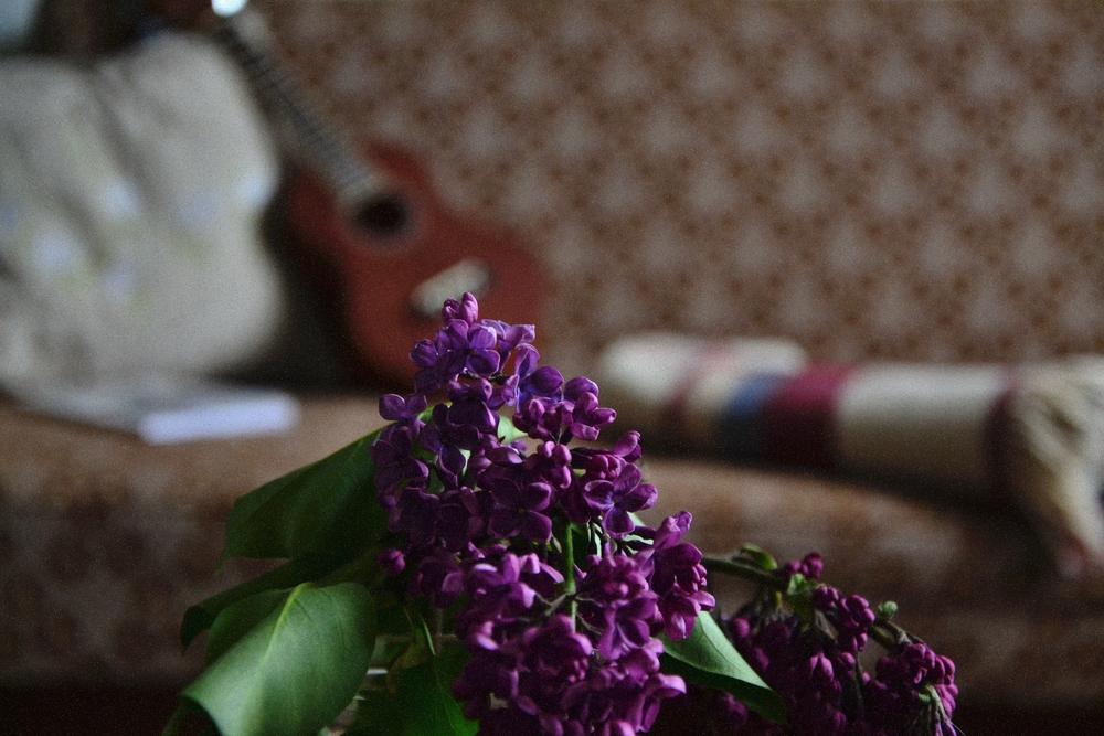uke and lilac.JPG