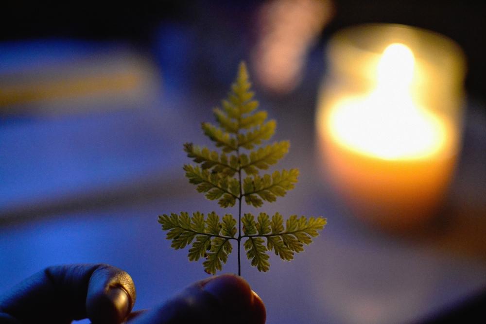 little fern