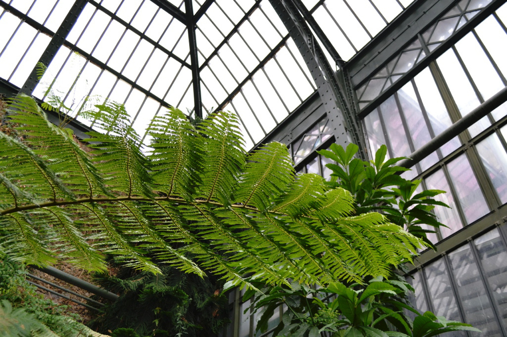 fern botanical garden