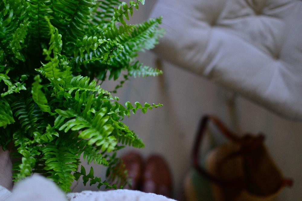 fluffy fern