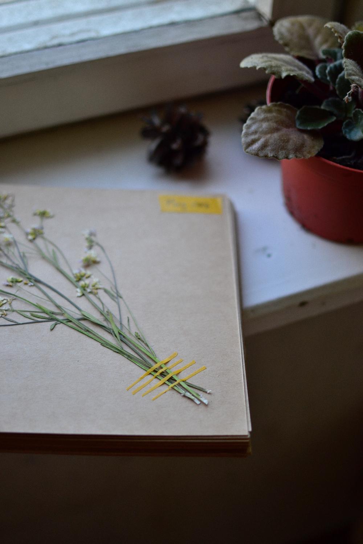 botanical diary