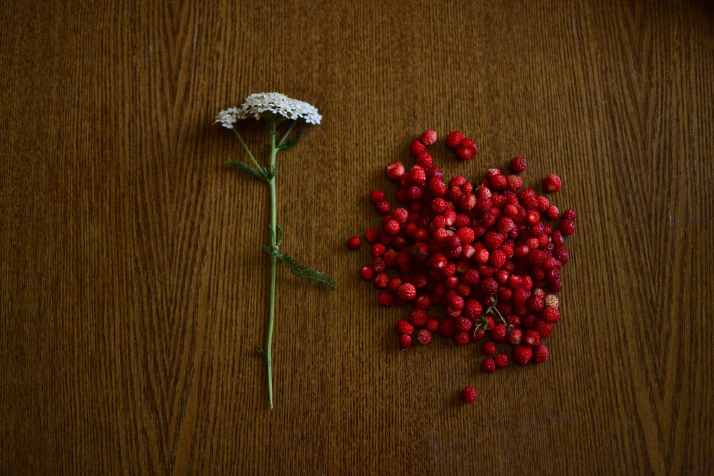 yarrow and wild strawberry
