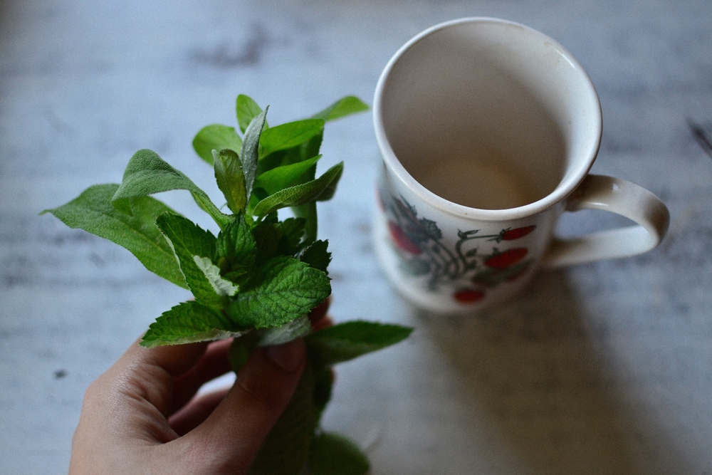 medicinal herbs tea