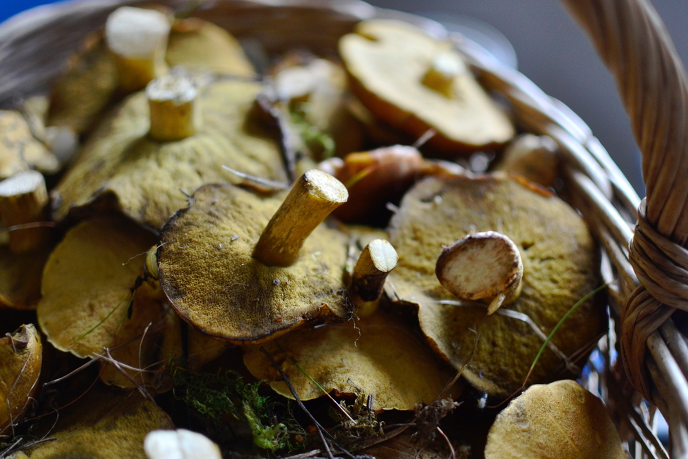 Mandarine's: Woodland gold