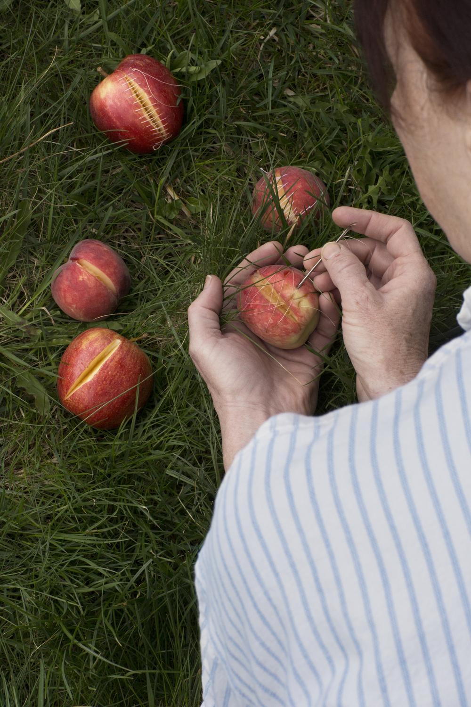 Fruit_pick0.jpg