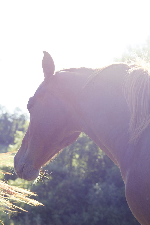 Horse_summer.jpg
