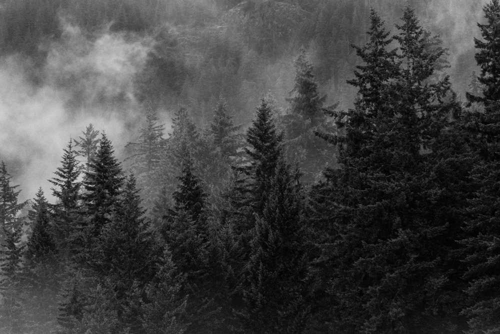 coastal foggy bliss